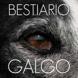 BESTIARIO - Galgo